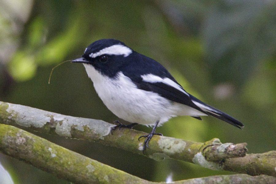 Atlante degli uccelli del Ticino in inverno: un appello ai cittadini